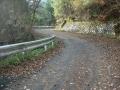 151122牧杉谷線、一面の松の落ち葉を行く