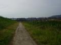 151122宇治川河川敷のコンクリ舗装を進む