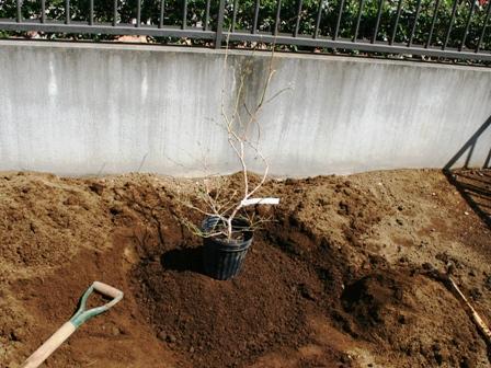 20160318ブルーベリー用土壌改良完成