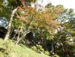 2015.11.012【殿ヶ谷戸庭園】024