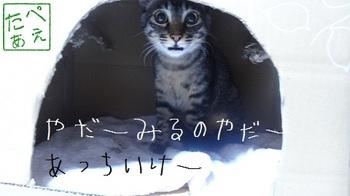 m_2-b12d2.jpg