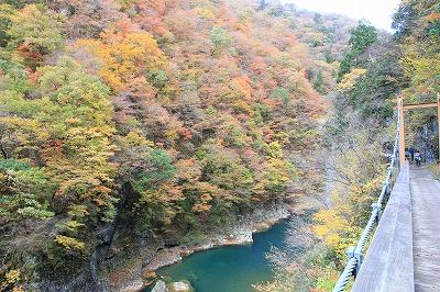akita_20151028_09.jpg