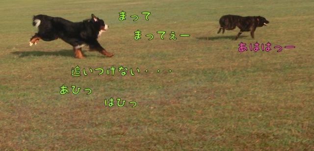 CIMG6543.jpg