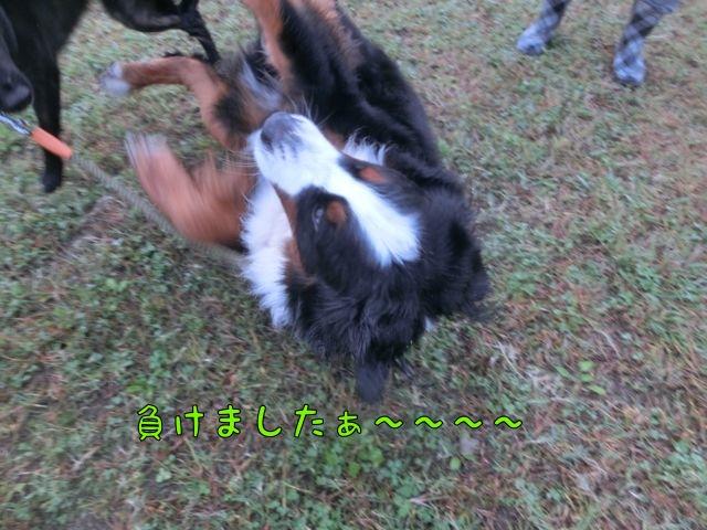 CIMG6613_20151022124316f5b.jpg