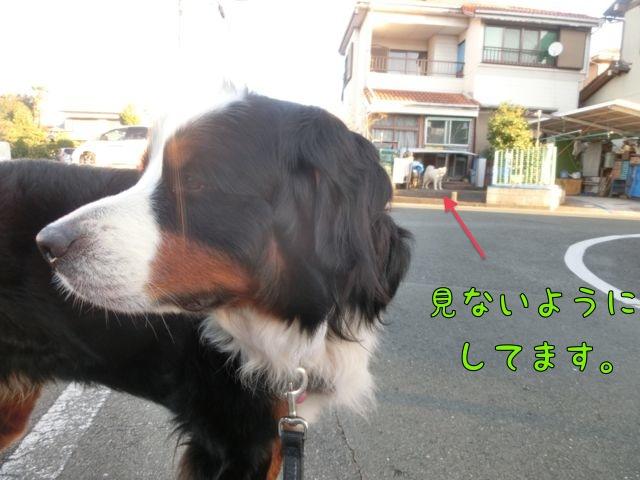 CIMG6744_201510281947063de.jpg