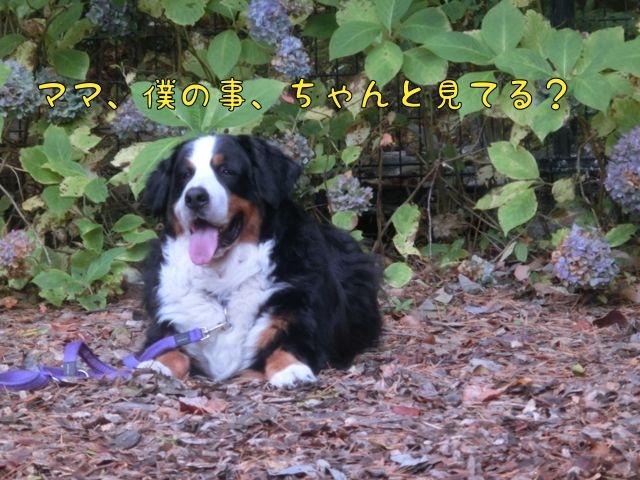 CIMG7001_20151103111113c52.jpg