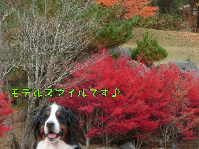 CIMG7014_20151103130905dce.jpg