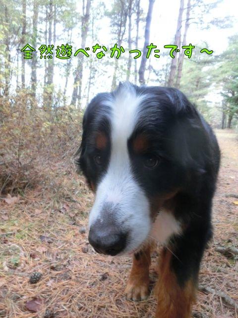 CIMG7023_201511031319003aa.jpg