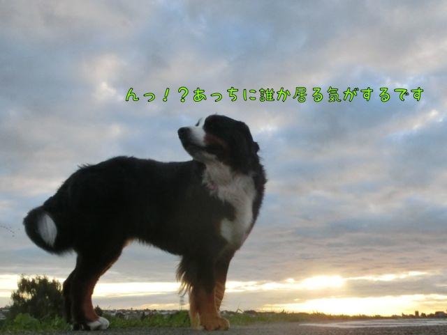 CIMG7319_2015111112443091e.jpg