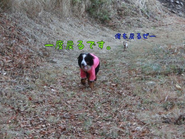 CIMG7874.jpg