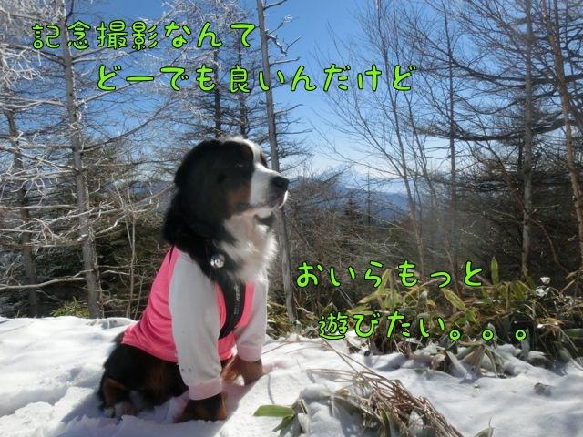 CIMG8008_20151201112738283.jpg
