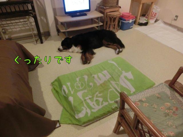 CIMG8081_20151201134153c34.jpg