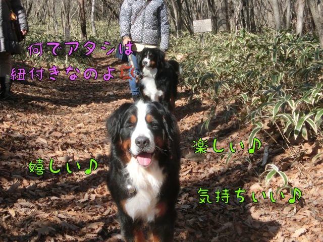 CIMG8143_2015120212575140c.jpg