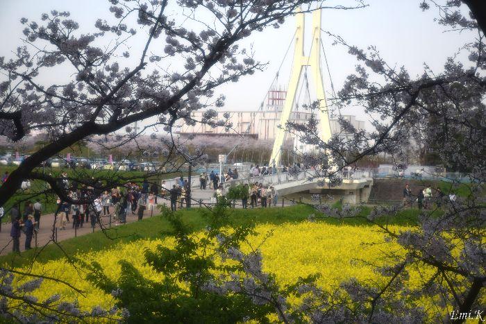 135-New-Emi-外野橋