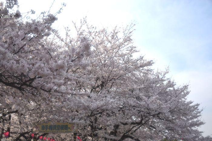 159-New-Emi-桜