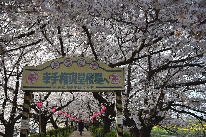 169--New-Emi-桜堤