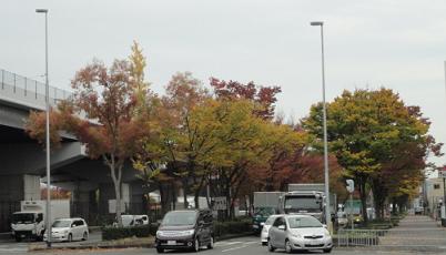 幹線道路沿いの紅葉①
