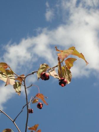 近場の秋①