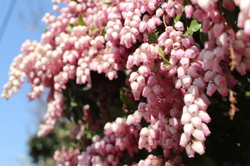 flower-20160331-02.jpg
