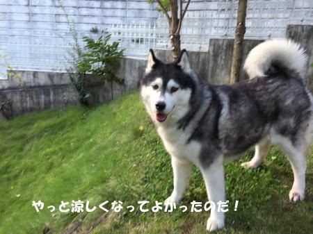 20150930_5.jpg