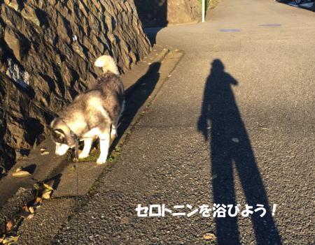 20151105_4.jpg