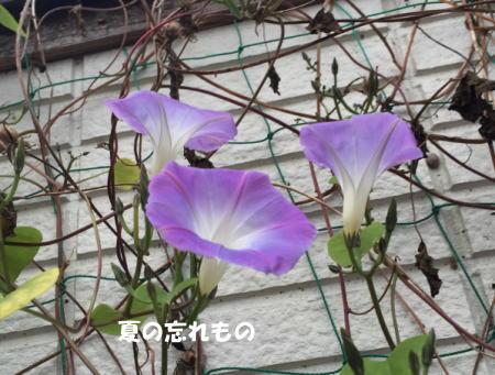 20151107_4.jpg