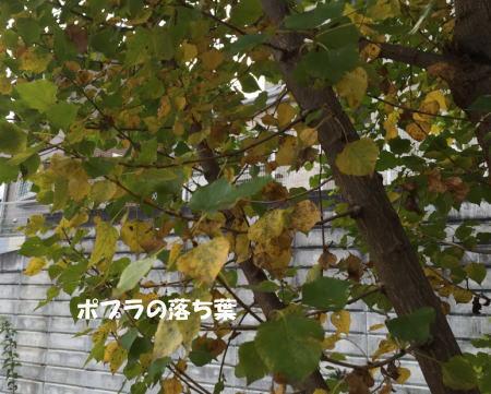 20151107_9.jpg