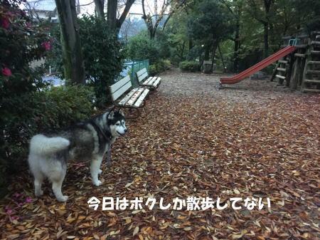 20151110_3.jpg