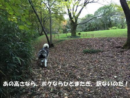 20151112_4.jpg