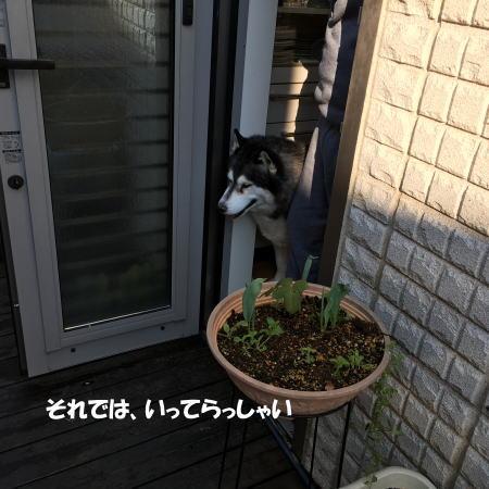 2016-03-15_6.jpg
