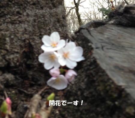 2016-03-21_1.jpg