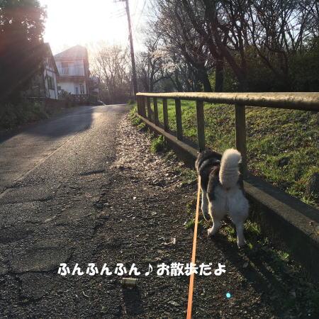 2016-03-31_1.jpg