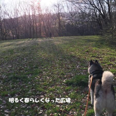 2016-03-31_4.jpg