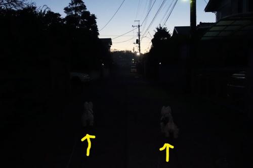 seitendakarahakumeigahayai1.jpg