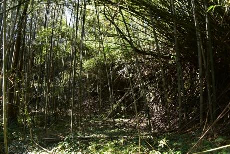 12竹が凄いことに