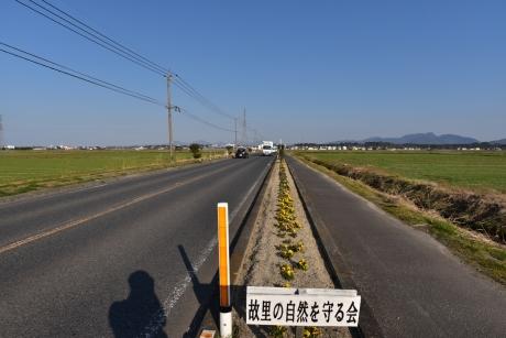 7田んぼに延びる道