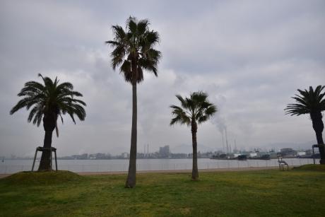 1朝の晴海親水公園