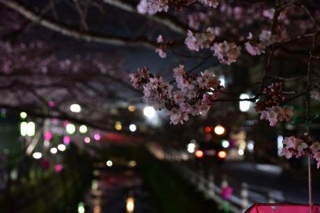 27城崎の桜