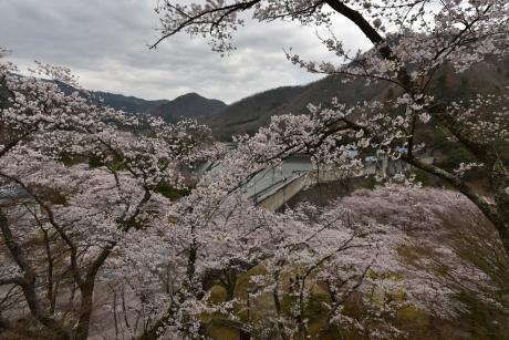 10大野ダムの桜まつり