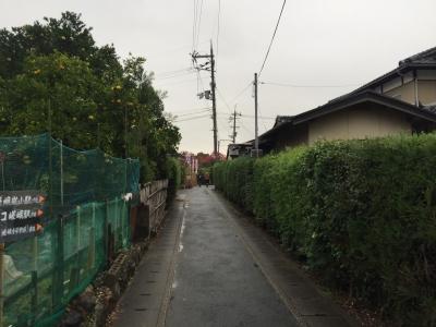 11/9嵐山