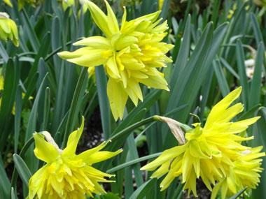 butchart-garden_spring_3.jpg