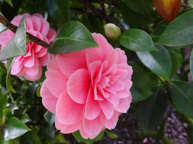butchart-garden_spring_4.jpg