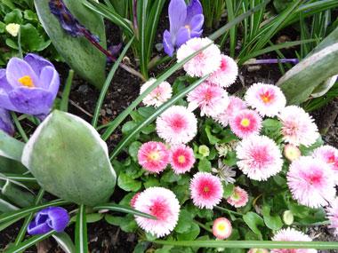butchart-garden_spring_5.jpg