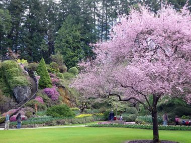 butchart-garden_spring_6.jpg
