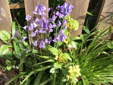 spring-flowers_1_20160408104505120.jpg