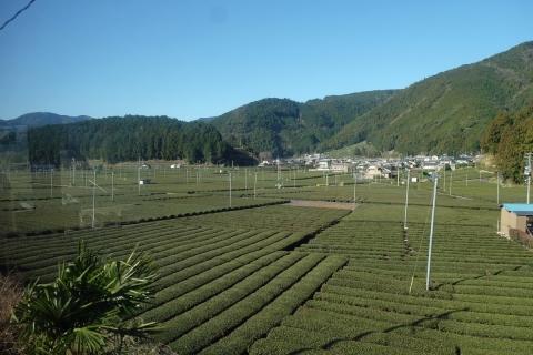 12大井川鐡道本線茶畑