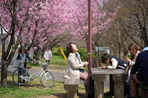 03新横浜お花見