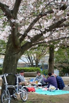 05新横浜お花見