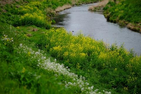 02春の水辺