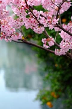 06運河の春